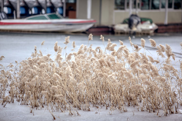 Agriculture Bale  Cold Cold Temperature Crop  Day Dry Farm Field Frozen Grass Grassy Harvesting Hay Ice It's Cold Outside Landscape Meadow Plant Reed Riverside Rural Scene Tropical Climate Weather Winter