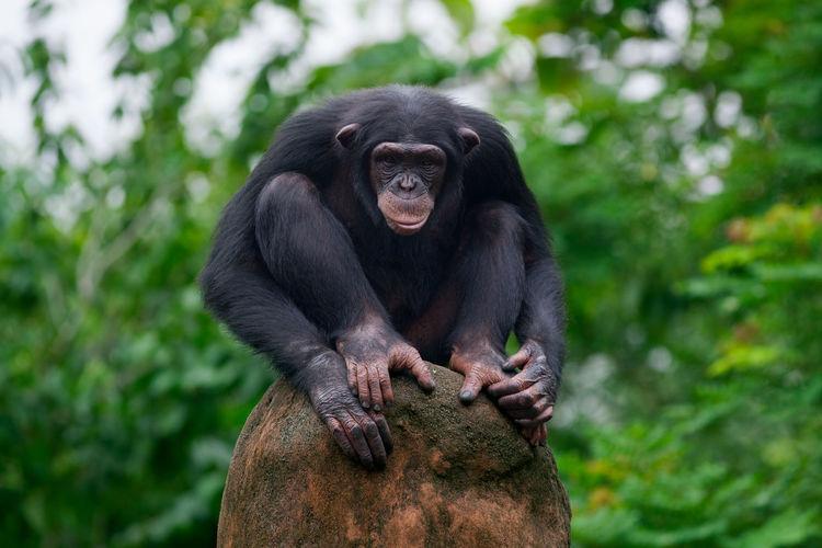 Monkey sitting on tree in zoo
