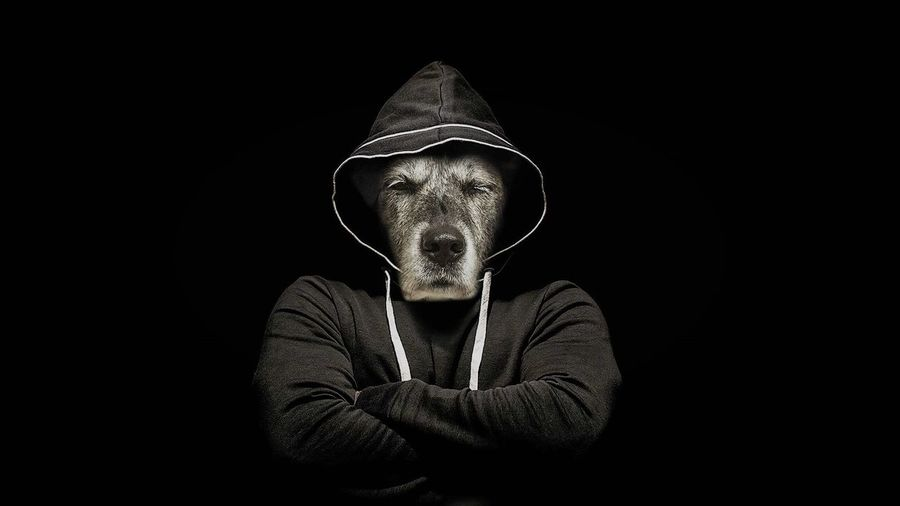 - SO WHAT??? - Gangsters Paradise Service Animals Visual Creativity
