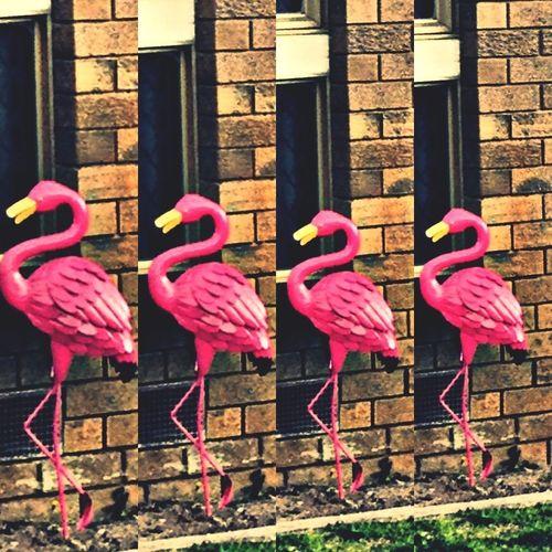 Pink Mingos Kings Of Kitsch