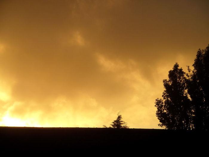 Cloud Cloud - Sky Dramatic Sky Growth No People Orange Color Outdoors Scenics Silhouette. Skyline. Sky Sunset Tree
