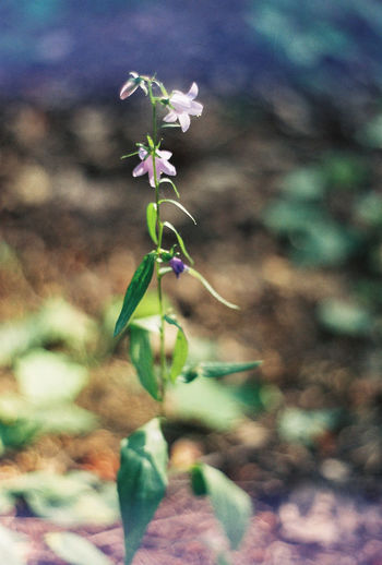 35mm Film Analogue Photography Beauty In Nature Close-up Day Flower Flower Head Focus On Foreground Fragility Freshness Growth Leaf Nature No People Outdoors Plant