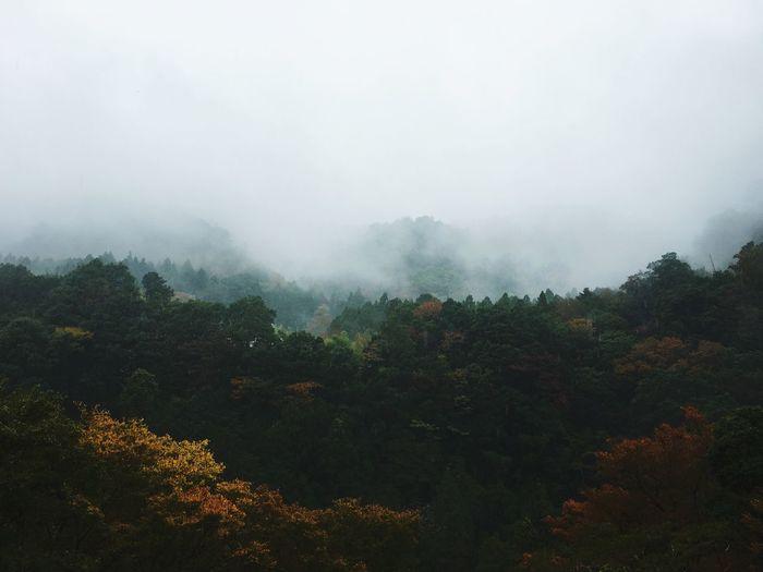 Japan Autumn Mountain