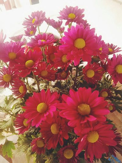 Aster domosus Flower Flowers Flowerporn Flowers,Plants & Garden Nature