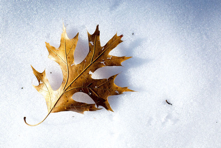 Directly Above Shot Of Yellow Leaf On Snow