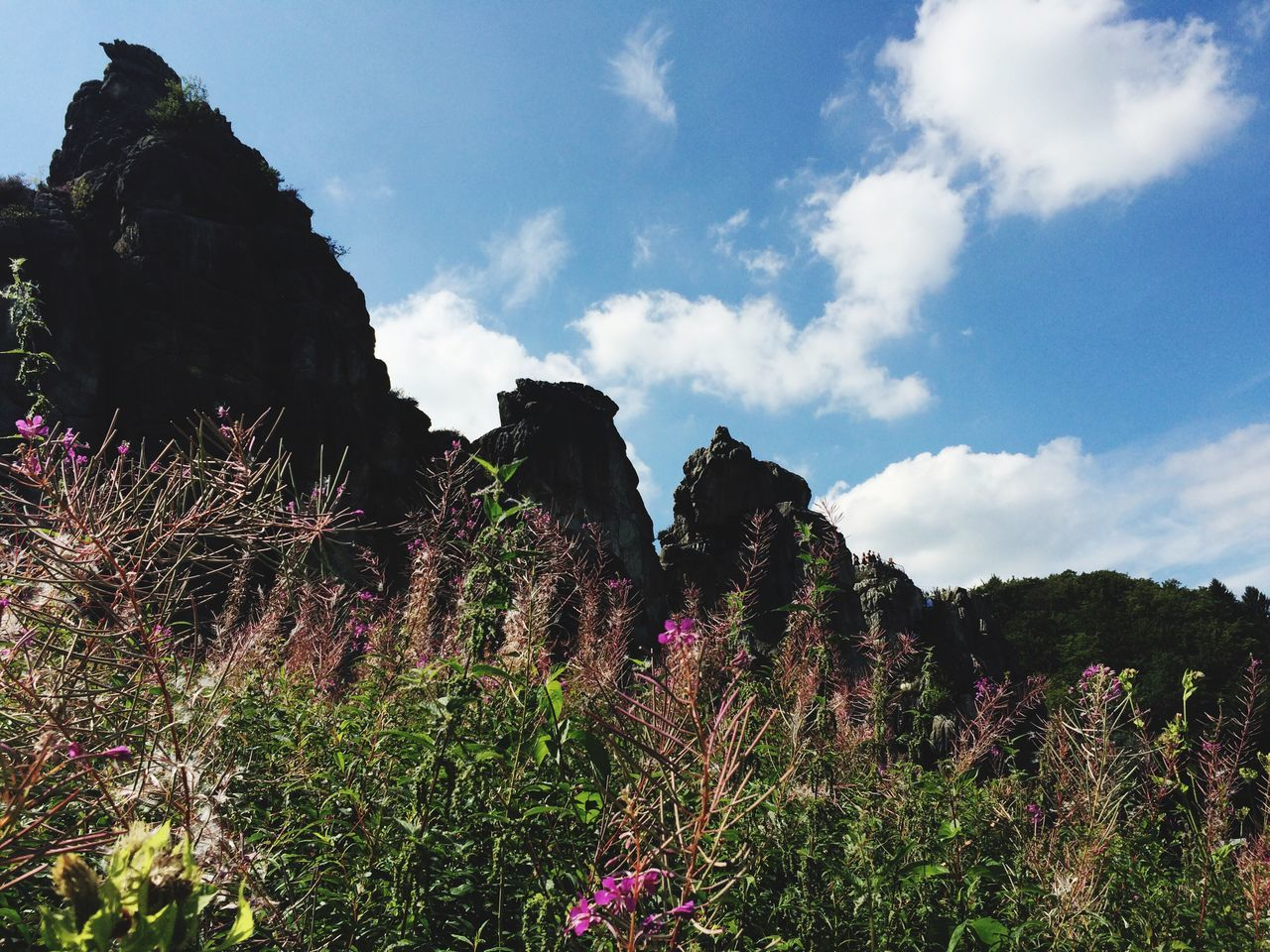 growth, nature, flower, beauty in nature, tranquility, plant, outdoors, sky, no people, day, scenics, landscape, freshness, tree