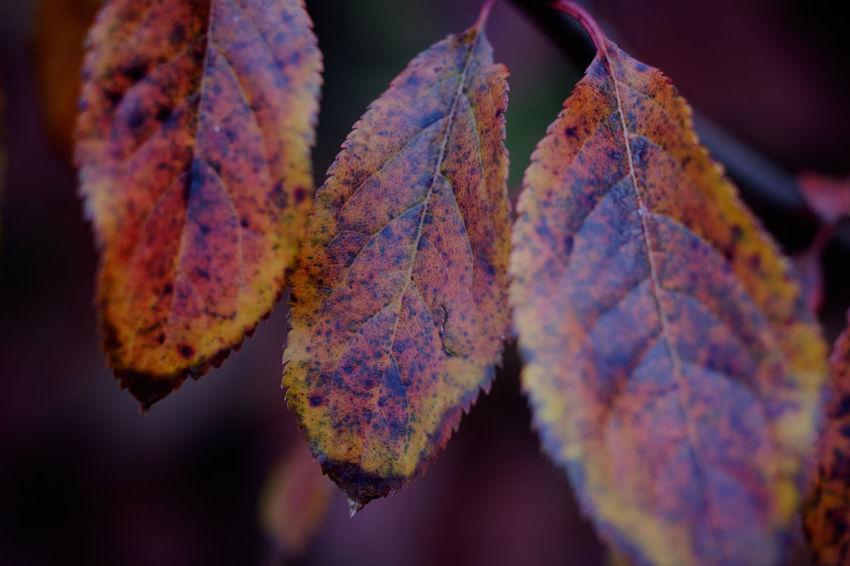 Maximum Closeness Zeiss60mm Tenebrio.photos Macro Leaf Autumn Showcase: November