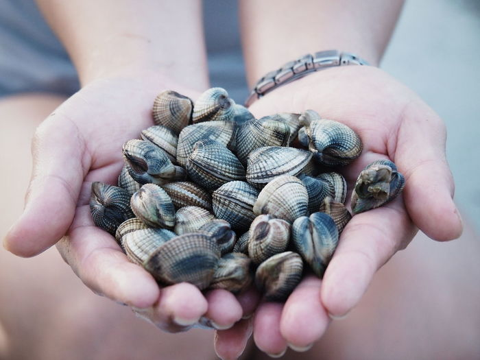 Shells Human Hand Human Body Part One Person Holding People Only Men One Man Only Outdoors Close-up Food Nature