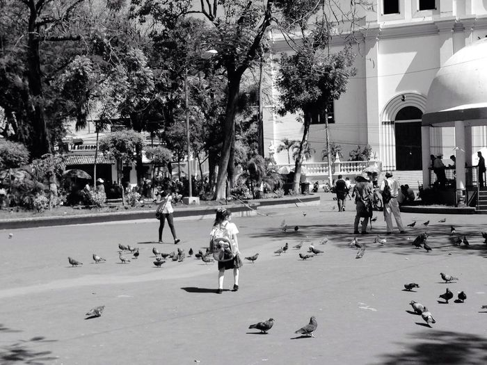 El Salvador San Miguel City Birds Peoplewalking