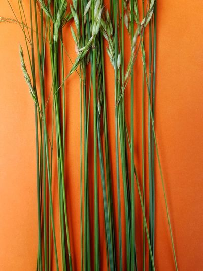 High Angle View Of Wheat On Orange Background