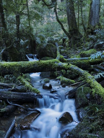 Long exposure of stream flowing in forest