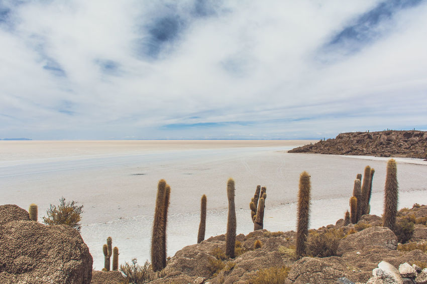 Isla Incahuasi - The Bolivian Salt Flats Beach Beauty In Nature Cacti Cactus Calm Cloud Cloud - Sky Cloudy Coastline Horizon Over Water Isla Incahuasi Majestic Nature No People Non-urban Scene Outdoors Scenics Sea Seascape Shore Sky Tranquil Scene Tranquility Water Wooden Post