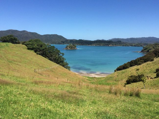 Otehei Islands Bayofislands Farm Beach Beauty In Nature Blue Clear Sky Grass Landscape Mountain Nature Newzealand Otehei Oteheiisland Outdoors Scenics Sea Sky Summer Tranquil Scene Tranquility Tree Water