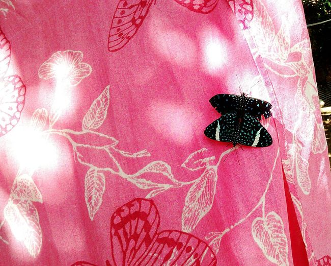 No People Textile Pink Color Animal Representation Indoors  Design Day Animal Wildlife Animal Themes Butterfly Butterfly - Insect Close-up Creativity Animal Love