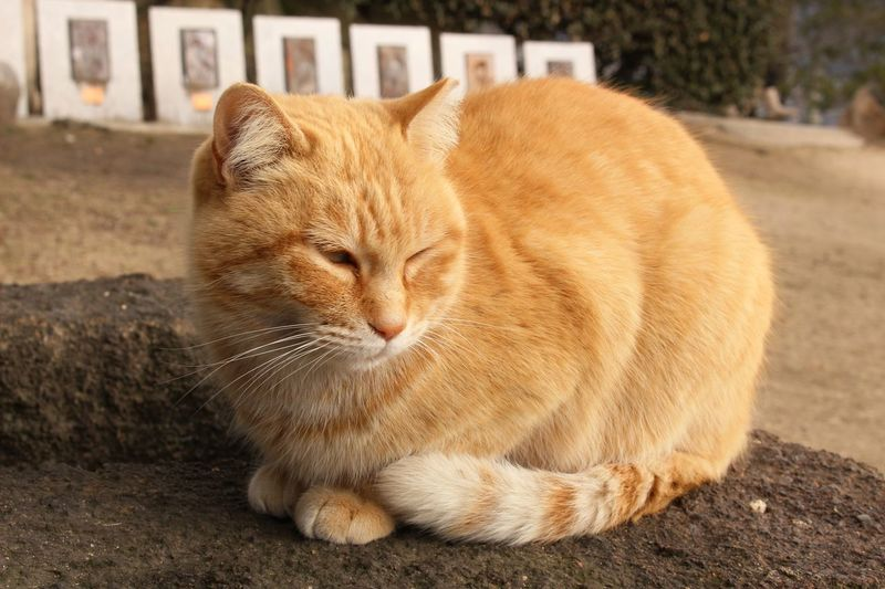 Cat Cute Blown Love Relaxing Chilling Day Life Nap