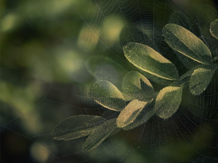 Close-up of plant seen through wet spider web