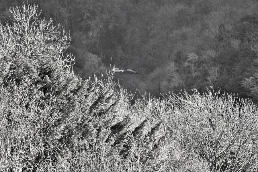 Observing commotion from the highest top of the Cheddar gorge. Animal Themes Animals In The Wild Beauty In Nature Bird Bird Of Prey Day Field Flying Grass Growth Landscape Mammal Nature No People One Animal Outdoors Plant Spread Wings Tree