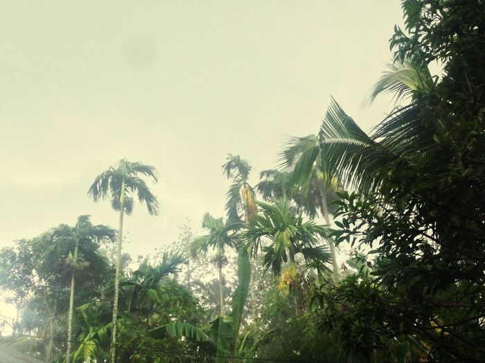 Hujan Rainy No People Miss Someone