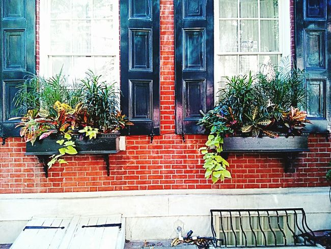 Plant Architecture Building Exterior Built Structure Growth Brick Wall Potted Plant Day Growing Outdoors Entrance Pot Plant Plant Life Outside Large Group Of Objects Variation Decor Decoration Growth Group Of Objects Various Vibrant Color No People Man Made Object