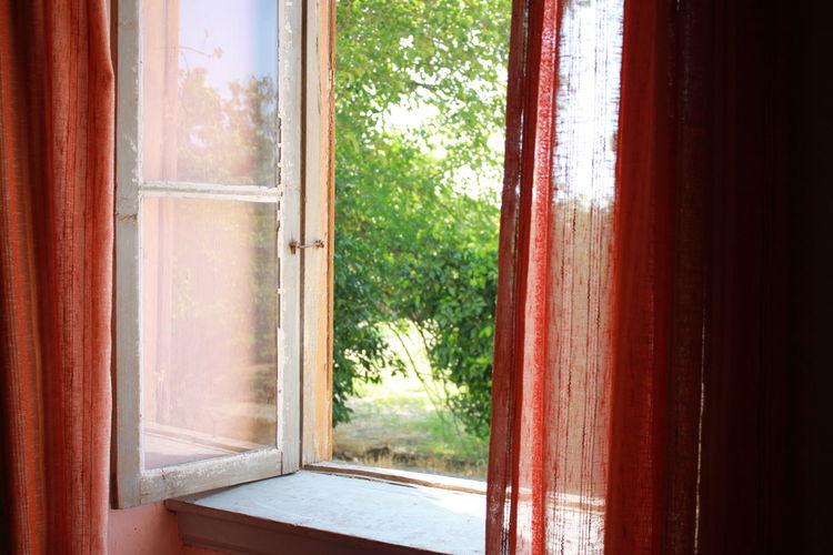View of trees through window