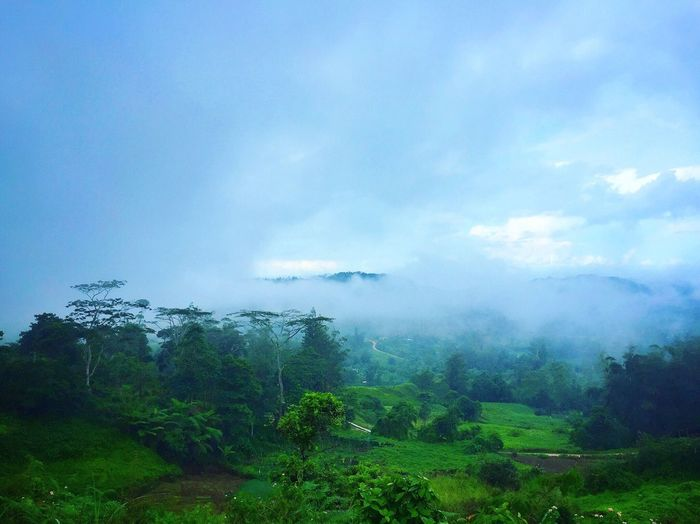 Nature Beauty In Nature Landscape Scenics Outdoors Day Tree Sky Cloud - Sky Green Color Mountain Forest Fog Scenery Tourism Travel Destinations Osmeña Peak Cebu City, Philippines