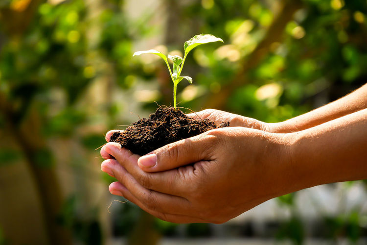 Human Hand Hand Focus On Foreground Human Body Part Growth Holding One Person Nature Plant Real People Close-up Sunlight Day Outdoors Body Part One Animal Hands Cupped Plant Part Leaf Care Human Limb Finger Gardening