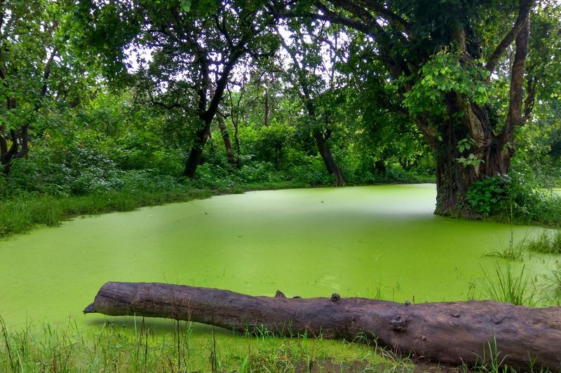 Rajajinationalpark Tree Green Color Water Nature Travel Destinations Plant Green Beauty In Nature Grass Tranquil Scene Tree Trunk Scenics Day Tree Tranquility Tranquil Scene Green Color Scenics Tree Trunk Grass Bench Growth Non-urban Scene Water