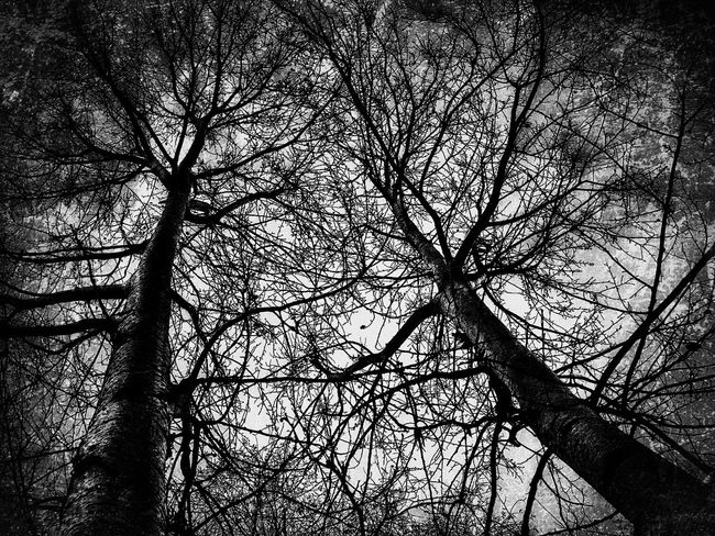 bare trees Bare Tree Bare Trees Trees Winter Trees Under The Tree Winter Nakedtree Nakednature EyeEm Best Shots EyeEm Best Edits Below Below Of Tree Blackandwhite Black And White Black & White Blackandwhite Photography Black&white Black And White Photography EyeEm Best Shots - Black + White EyeEm Masterclass Branches