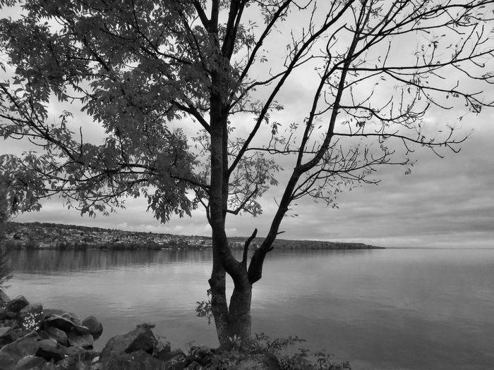Landscape Lakeshore Tree Blackandwhite