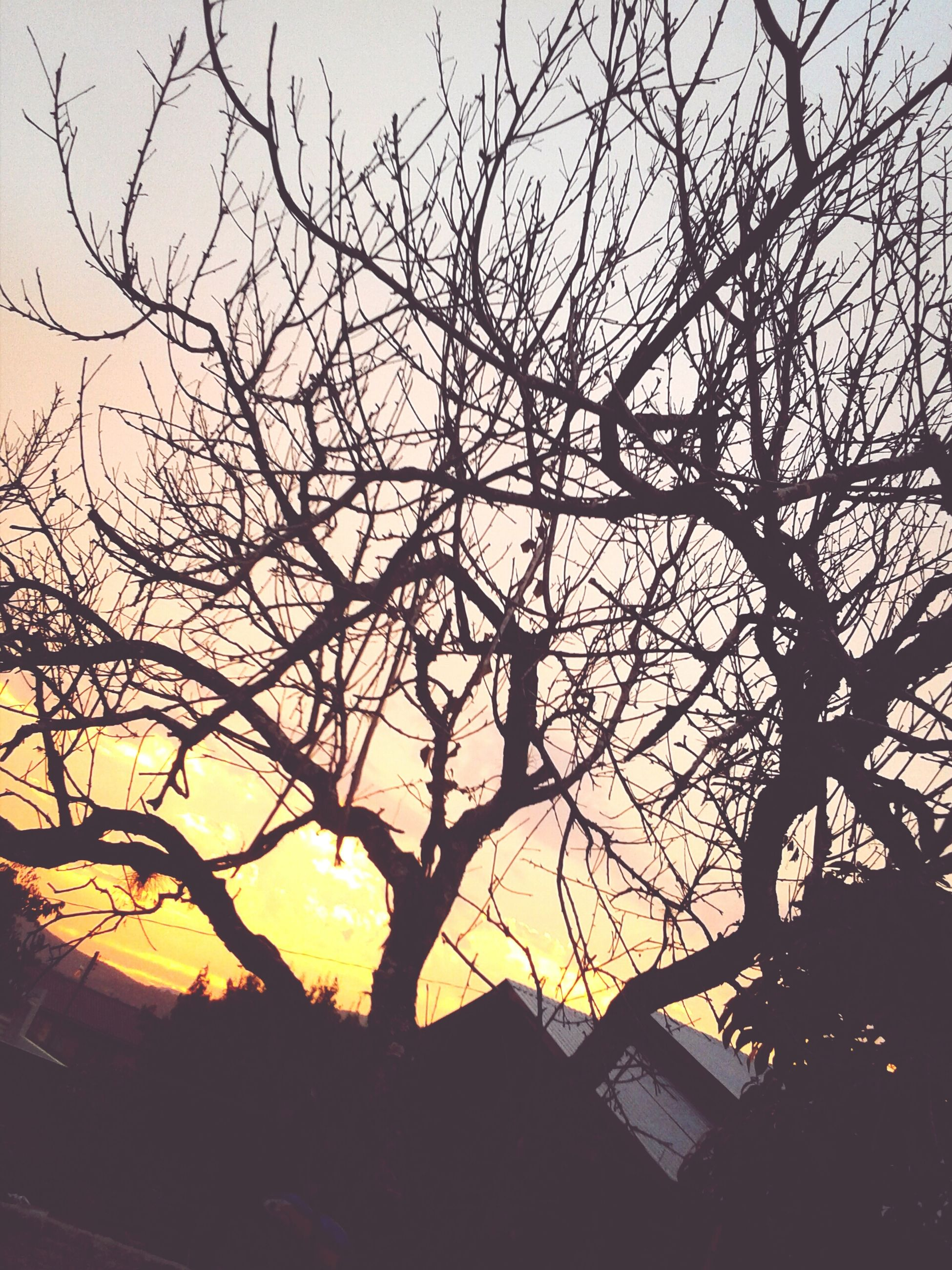 silhouette, bare tree, sunset, branch, tree, built structure, low angle view, sky, building exterior, architecture, nature, orange color, beauty in nature, tranquility, outdoors, sunlight, no people, scenics, dusk, sun