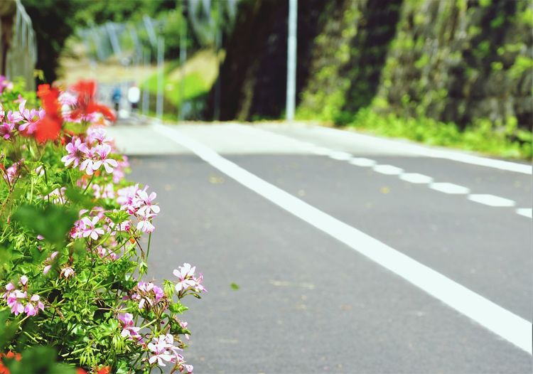 View of flowering plant on road
