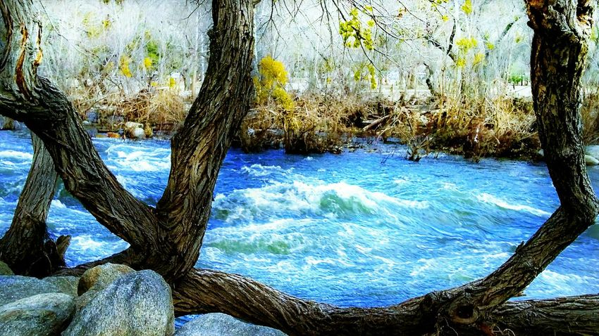 Kern River. Tree No People Nature Close-up Beauty In Nature Day Outdoors Water Animal Themes Sky river rapids blue color