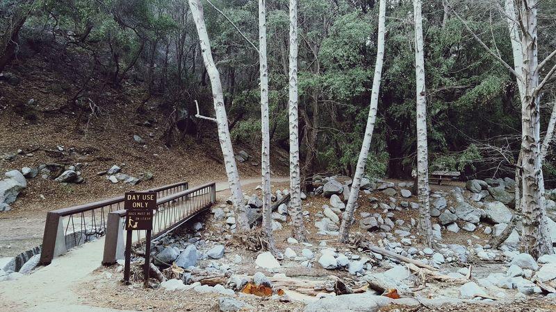 daily tracks Outdoors Nature Forest Tree Hiking Hikingadventures Hiking Trail Alltrails Optoutside Lahikes Beactive AndroidPhotography Wanderer Explore DiscoverLA Lost In LA Bridge EyEmNature EyEmNewHere Perspectives On Nature