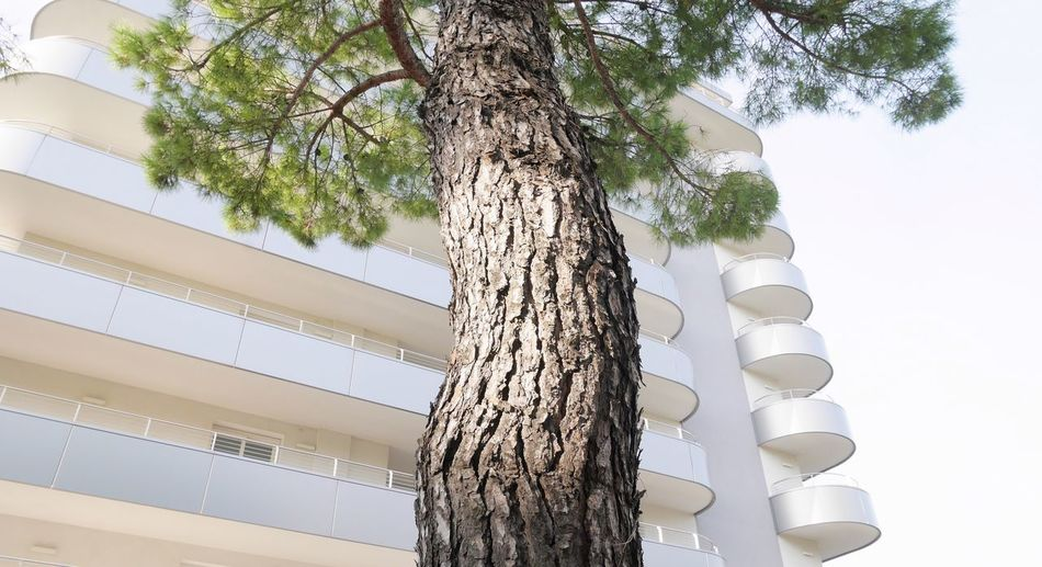 Tree Low Angle View Plant Sky Nature Tree Trunk Trunk Day Growth Outdoors Clear Sky Green Color Tall - High White Color