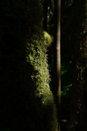 Plant Tree Growth No People Nature Beauty In Nature Forest Green Color Land Tranquility Outdoors Day Tree Trunk Trunk Close-up Focus On Foreground Sunlight Moss Tranquil Scene Light Light And Shadow Nature