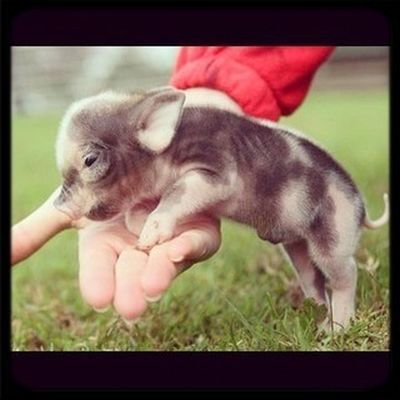 I want one of these!!!!!!!!