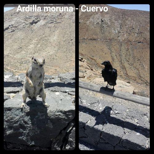 Incontri a Fuertaventura Animals In The Wild Canarias Fuertaventura Canary Islands Islas Canarias Fuerteventuraexperience VERANO 2017