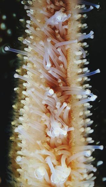 Starfish  Marine Biology Suctioncups Oceanlife Marine Life Animal Body Part Arm Close-up Detail Aquarium Aquatic No People Focal Point Echinoderm Animal Photography Submerged Underwater