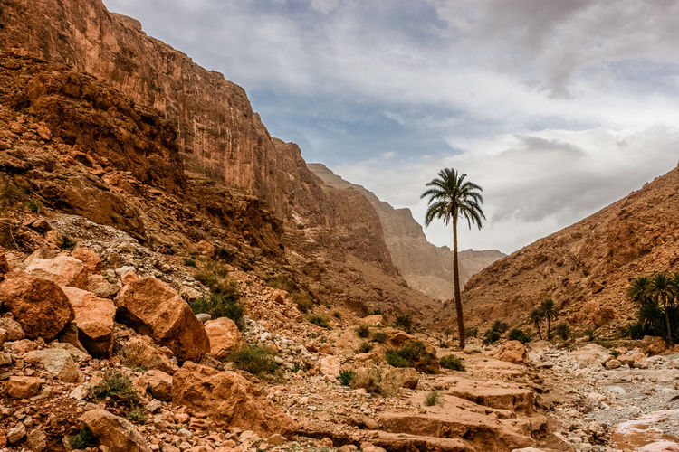 Palm tree in Todra gorges, Morocco Arid Climate Beauty In Nature Day Landscape Mountain Nature No People Outdoors Palm Tree Rock - Object Rock Formation Scenics Sky Todra Tranquil Scene Tranquility Tree