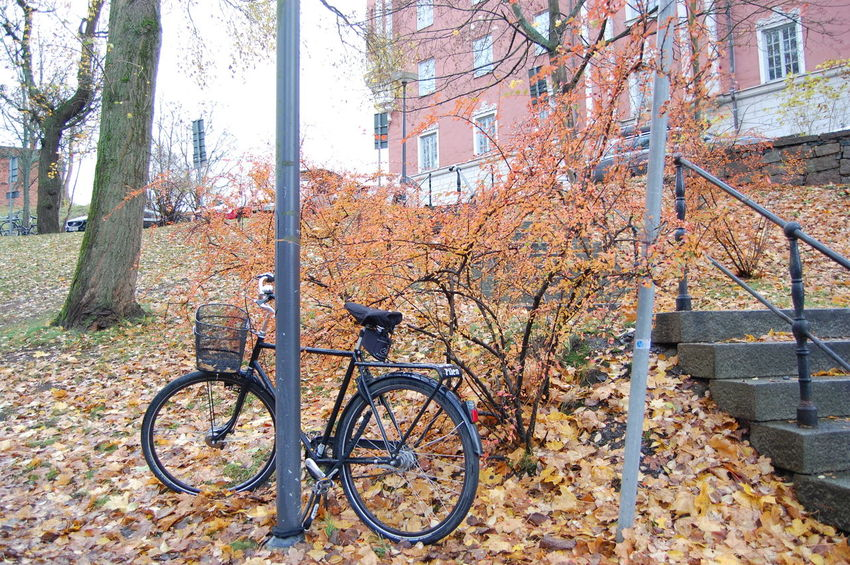 Bicycle Colorful Day Fall Fall Colors Leaves Nature Nikon Nikonphotography October Orange Color Outdoors Parking Tree