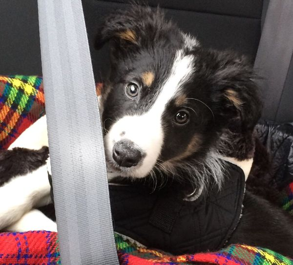 Mucky pup Muddy Paws Puppy Love I Love My Dog