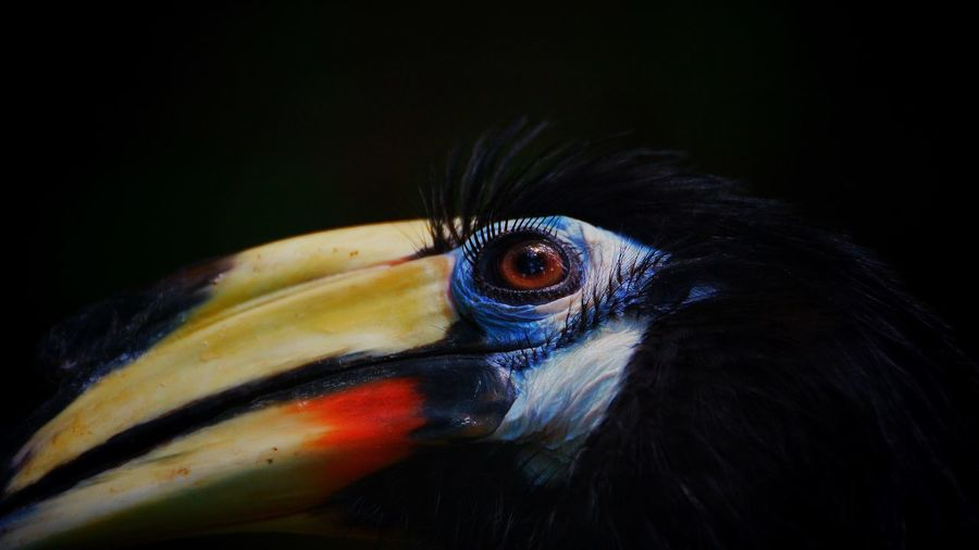 Close-up of a bird