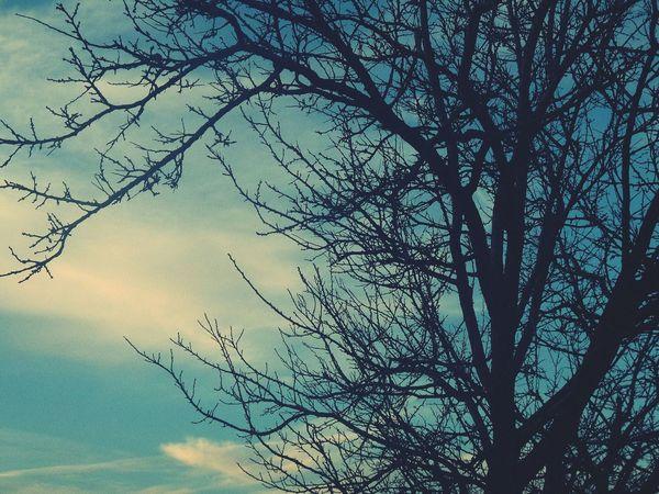 зимнее небо...) зима дерево