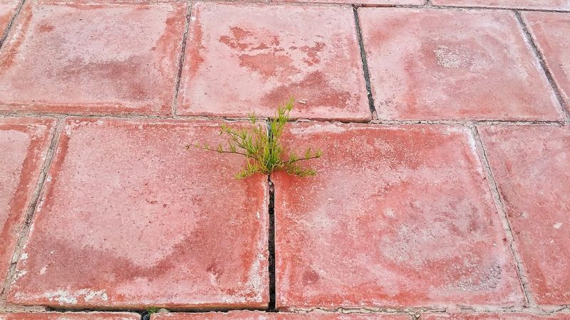 Plant Plant Part Wall - Building Feature Leaf Architecture Built Structure Brick Wall No People Wall Brick Growth Red Outdoors Nature Pink Color Day Close-up Building Exterior Textured  Green Color