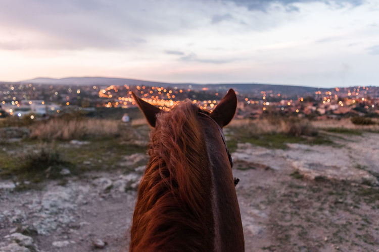 Rear view of a horse on landscape