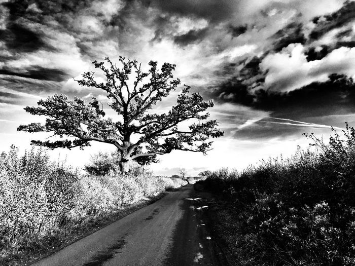 Road Tree Sky Nature Cloud - Sky The Way Forward Landscape Outdoors Day Tranquility No People Scenics Growth Beauty In Nature Grass