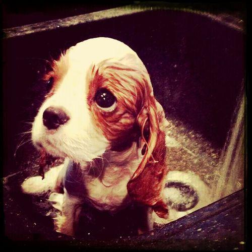 off dedikce köpeklerin sadakati aklıma geliyor çünkü bir insanın köpekliğindense bir köpeğin insanlığı kâfidir hani..