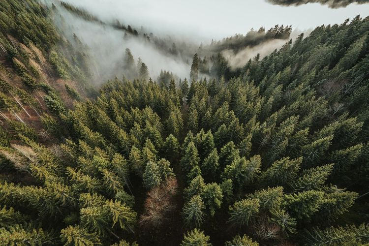 High angle view of pine trees against sky
