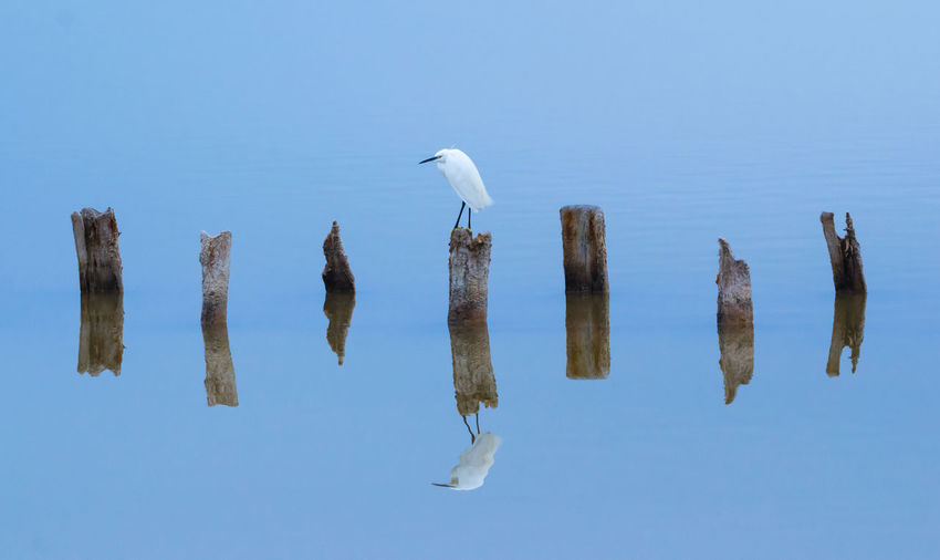 Egret On Wooden Post In Lake