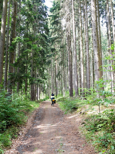 Adventure By Bike Bike Trip Travel Photography Adventure Beauty In Nature Bike Packing Bike Touring Day Forest Men Nature One Person Outdoors People Real People Road Scenics Sky The Way Forward Transportation Tree Wilderness Adventure